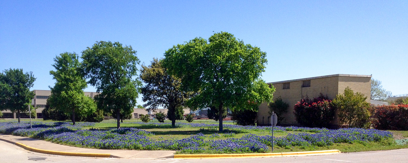 Bluebonnets at the J.J. Pickle Research Campus (PRC)
