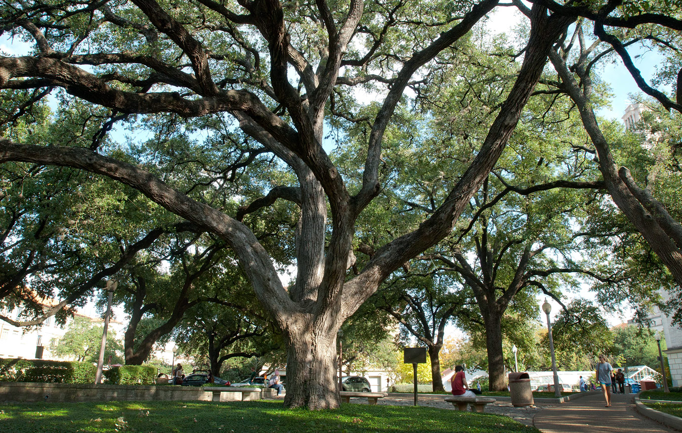 Battle Oaks - Famous tree survivors of the survivors of the Civil War