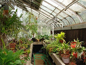 looking inside UT Greenhouse