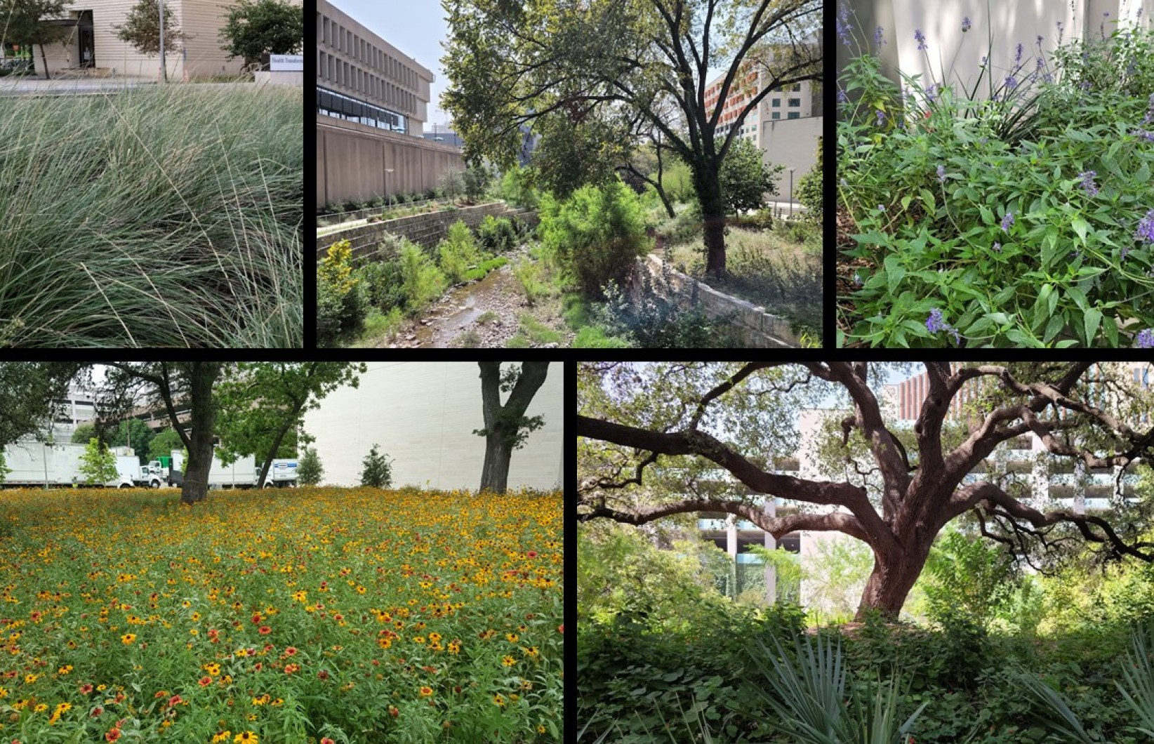Image collage of the landscape at Dell Medical School