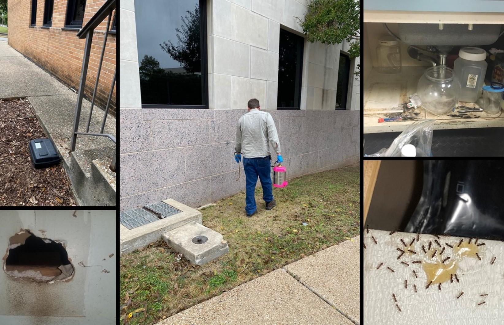 Image collage of campus pest control