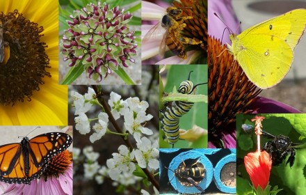 photo collage of flowers and pollinating insects