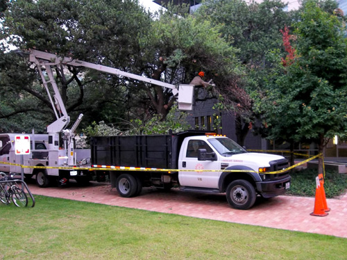 Lift truck pruning trees at the Student Activity Center